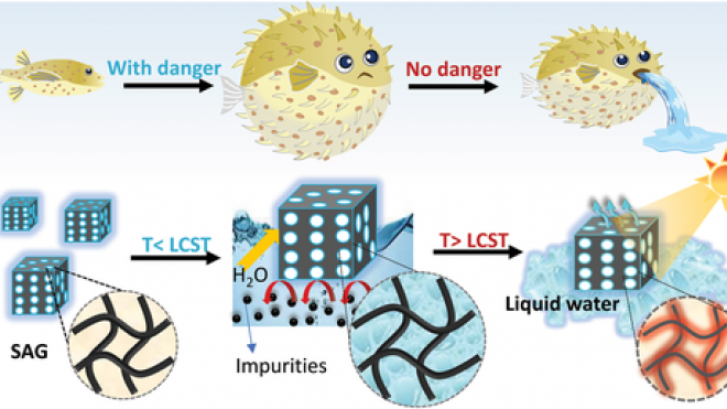 A Bioinspired Elastic Hydrogel for Solar‐Driven Water Purification
